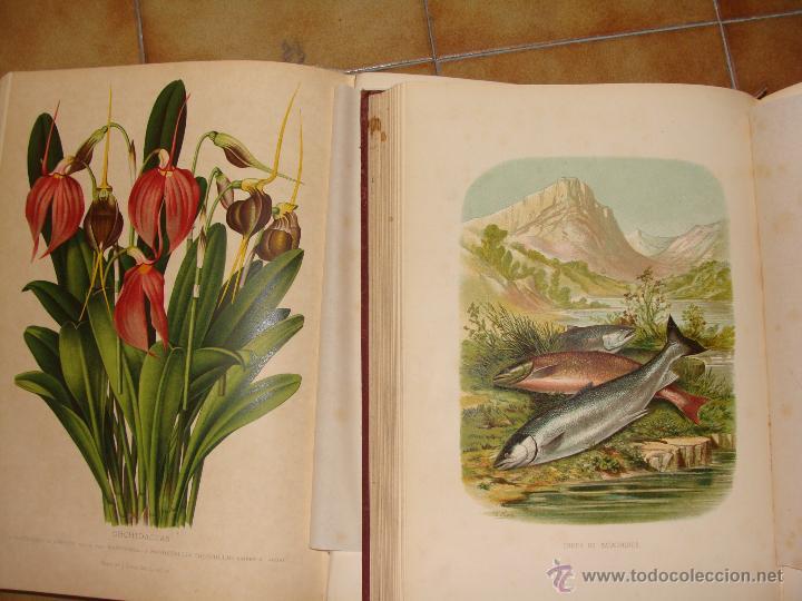 Libros antiguos: HISTORIA NATURAL VILANOVA Y PIERA. 8 TOMOS. 1872. 3260 ILUSTRACIONES LITOGRÁFICAS Y 105 CRÓMOLITOGRA - Foto 14 - 44073956