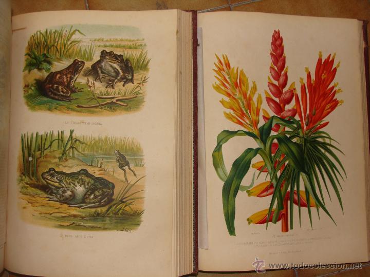 Libros antiguos: HISTORIA NATURAL VILANOVA Y PIERA. 8 TOMOS. 1872. 3260 ILUSTRACIONES LITOGRÁFICAS Y 105 CRÓMOLITOGRA - Foto 15 - 44073956