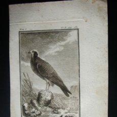 Libros antiguos: 1772-EL DARDABASI-PAJAROS-BIOLOGIA-BUFFON-GRABADO ORIGINAL-HISTORIA NATURAL DE LAS AVES. Lote 46272949