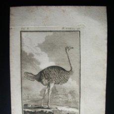 Libros antiguos: 1772-EL AVESTRUZ -PAJAROS-BIOLOGIA-BUFFON-GRABADO ORIGINAL-HISTORIA NATURAL DE LAS AVES. Lote 46289017