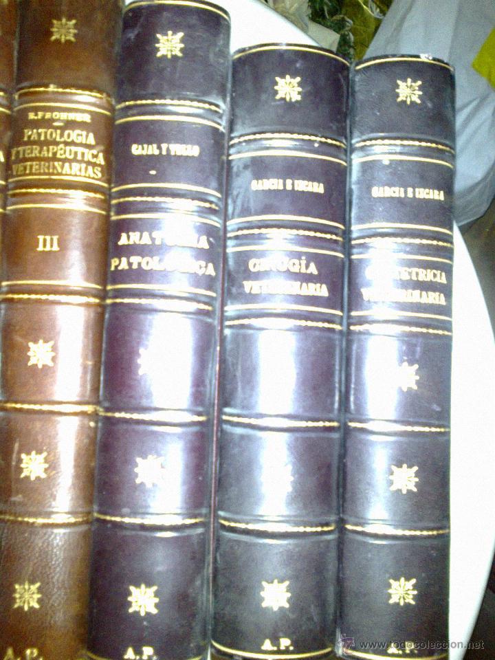 Libros antiguos: CIRUGÍA VETERINARIA. GARCÍA E IZCARA 1916 - Foto 3 - 38502628