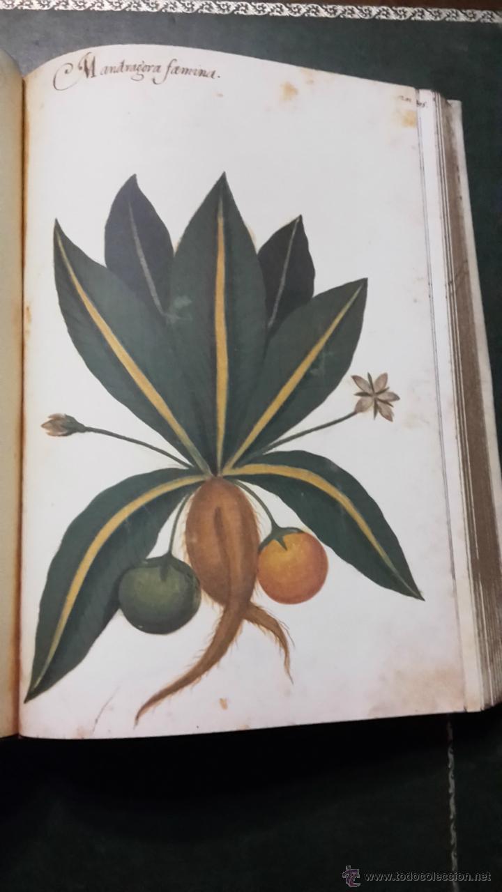 Libros antiguos: Atlas de historia natural felipe ii - Foto 5 - 46761111
