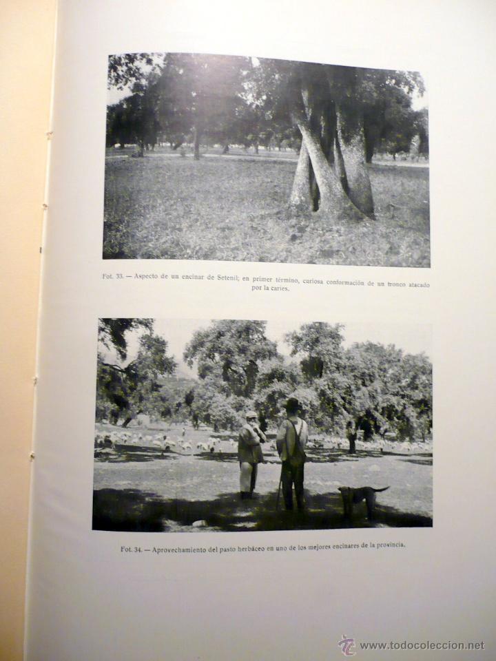 Libros antiguos: ESTUDIO VEGETACIÓN FORESTAL DE LA PROVINCIA DE CÁDIZ MADRID 1930 - Foto 3 - 47348997