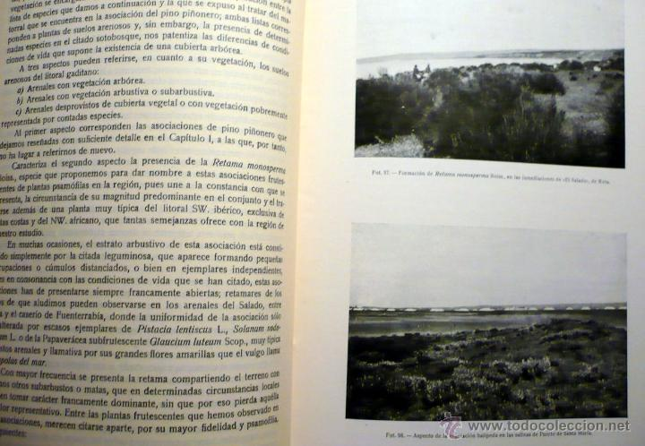 Libros antiguos: ESTUDIO VEGETACIÓN FORESTAL DE LA PROVINCIA DE CÁDIZ MADRID 1930 - Foto 4 - 47348997