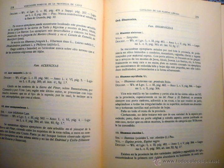 Libros antiguos: ESTUDIO VEGETACIÓN FORESTAL DE LA PROVINCIA DE CÁDIZ MADRID 1930 - Foto 5 - 47348997