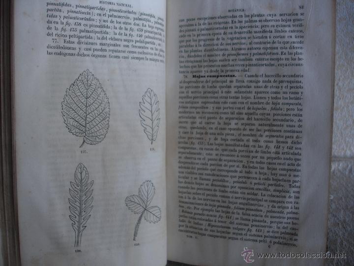 Libros antiguos: Lecciones de historia natural BOTANICA 1845 - Foto 4 - 47650582