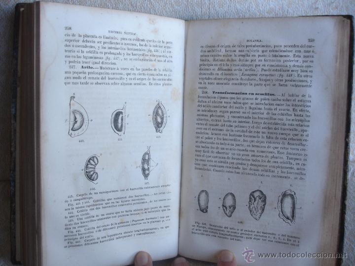Libros antiguos: Lecciones de historia natural BOTANICA 1845 - Foto 5 - 47650582