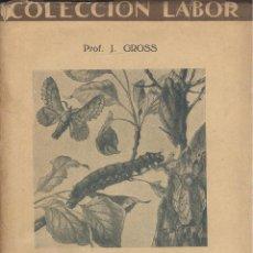 Libros antiguos: J. GROSS. ZOOLOGÍA. II INSECTOS. COLECCIÓN LABOR. BARCELONA, 1927.. Lote 47922255