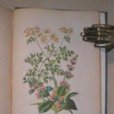 Libros antiguos: BRUGERE, F. DE LA: L'ECOLE DU JARDINIER AMATEUR FLEURISTE & POTAGER.. Lote 48390746