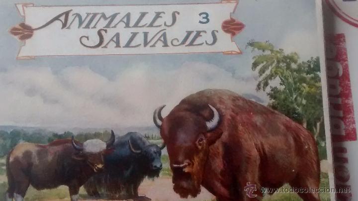 ANIMALES SALVAJES. CUADERNOS 3 Y 4. (Libros Antiguos, Raros y Curiosos - Ciencias, Manuales y Oficios - Bilogía y Botánica)