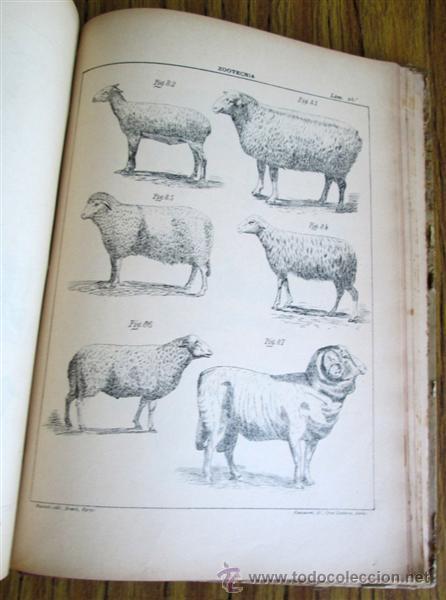 Libros antiguos: Novísimo tratado teórico practico AGRICULTURA Y ZOOTECNIA - ATLAS - Por Joaquín Ribera 1894 - Foto 7 - 49930850