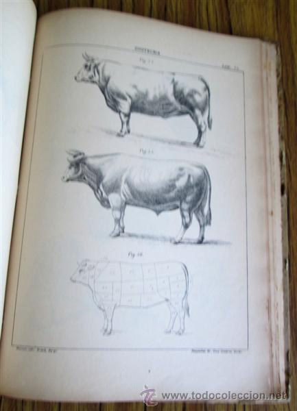 Libros antiguos: Novísimo tratado teórico practico AGRICULTURA Y ZOOTECNIA - ATLAS - Por Joaquín Ribera 1894 - Foto 8 - 49930850