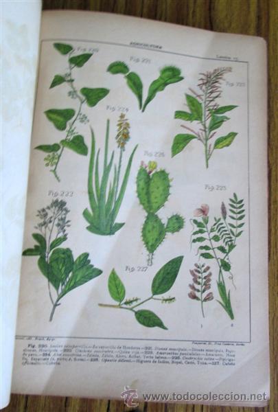 Libros antiguos: Novísimo tratado teórico practico AGRICULTURA Y ZOOTECNIA - ATLAS - Por Joaquín Ribera 1894 - Foto 11 - 49930850