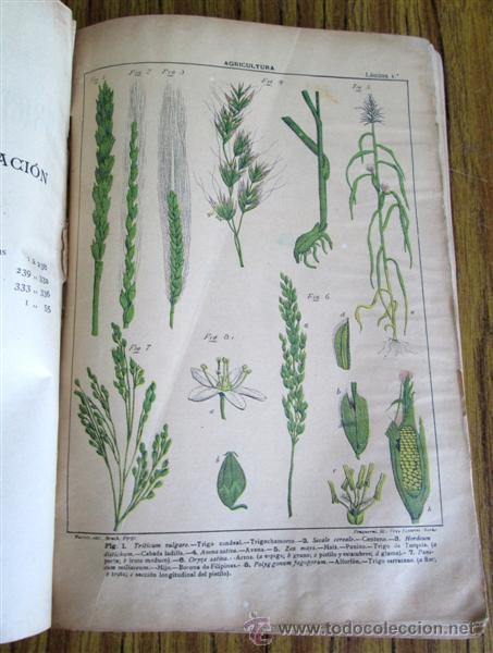 Libros antiguos: Novísimo tratado teórico practico AGRICULTURA Y ZOOTECNIA - ATLAS - Por Joaquín Ribera 1894 - Foto 12 - 49930850