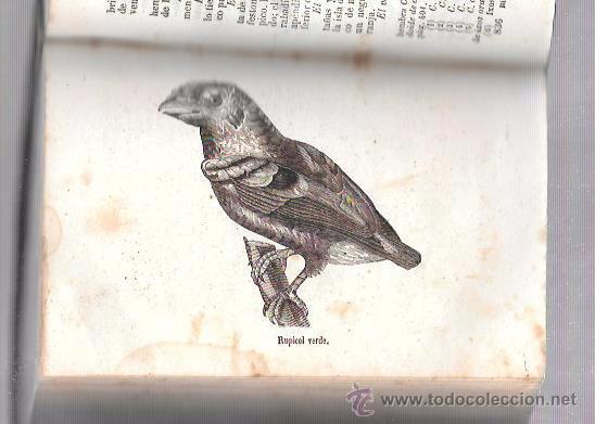 Libros antiguos: OBRAS COMPLETAS, DE BUFFON. HISTORIA NAT. TOMO 23-24. MR. P. LESSON. MELLADO EDITOR. MADRID, 1849. - Foto 2 - 50097452