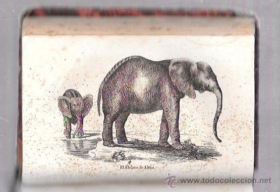 Libros antiguos: OBRAS COMPLETAS, DE BUFFON. HISTORIA NAT. TOMO 23-24. MR. P. LESSON. MELLADO EDITOR. MADRID, 1849. - Foto 3 - 50097452