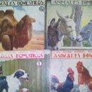 Libros antiguos: EL REINO ANIMAL PARA NIÑOS, ANIMALES DOMÉSTICOS. CUADERNOS 1,2,3 Y 4.. Lote 24637202