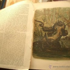 Libros antiguos: LA CREACIÓN. HISTORIA NATURAL TOMO V. VILANOVA Y PIERA. JUAN 1880 . Lote 51764003