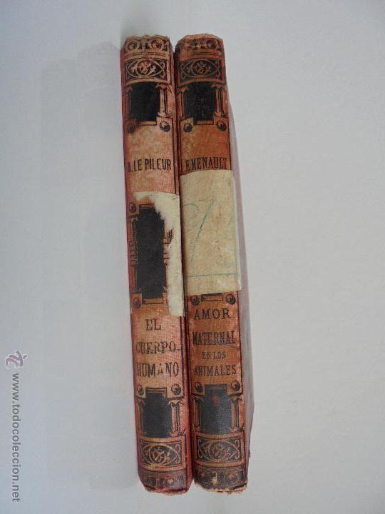 Libros antiguos: BIBLIOTECA DE MARAVILLAS. ERNESTO MENAULT. A. LE PILEUR. 1885-1886. 2 VOLUMENES. EL CUERPO HUMANO Y - Foto 7 - 52524378