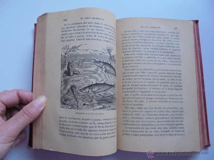 Libros antiguos: BIBLIOTECA DE MARAVILLAS. ERNESTO MENAULT. A. LE PILEUR. 1885-1886. 2 VOLUMENES. EL CUERPO HUMANO Y - Foto 37 - 52524378
