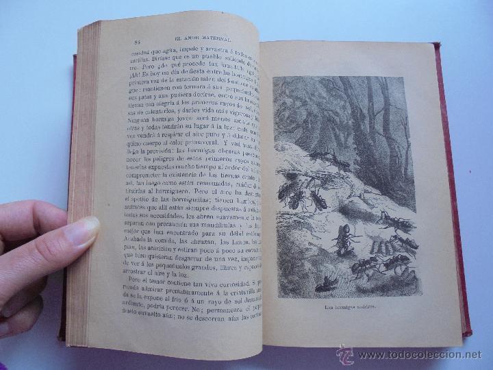 Libros antiguos: BIBLIOTECA DE MARAVILLAS. ERNESTO MENAULT. A. LE PILEUR. 1885-1886. 2 VOLUMENES. EL CUERPO HUMANO Y - Foto 39 - 52524378