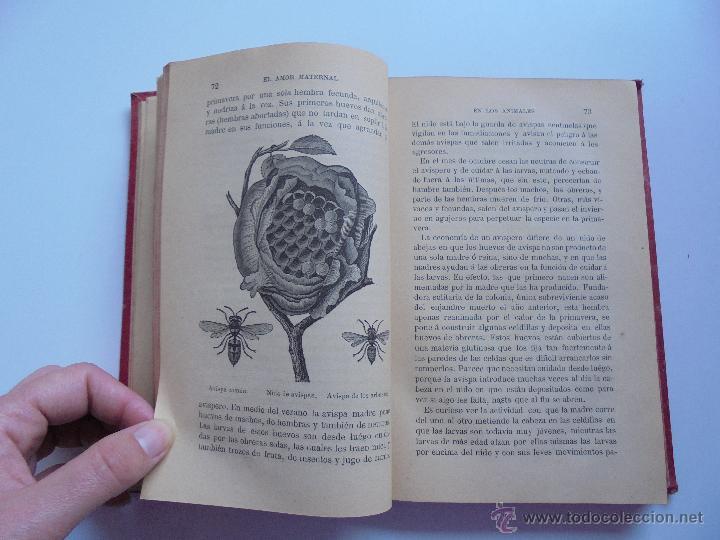 Libros antiguos: BIBLIOTECA DE MARAVILLAS. ERNESTO MENAULT. A. LE PILEUR. 1885-1886. 2 VOLUMENES. EL CUERPO HUMANO Y - Foto 40 - 52524378