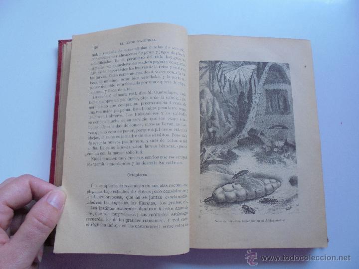 Libros antiguos: BIBLIOTECA DE MARAVILLAS. ERNESTO MENAULT. A. LE PILEUR. 1885-1886. 2 VOLUMENES. EL CUERPO HUMANO Y - Foto 42 - 52524378