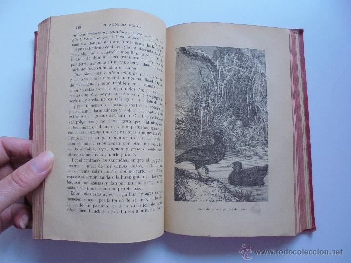 Libros antiguos: BIBLIOTECA DE MARAVILLAS. ERNESTO MENAULT. A. LE PILEUR. 1885-1886. 2 VOLUMENES. EL CUERPO HUMANO Y - Foto 43 - 52524378