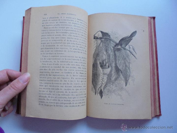 Libros antiguos: BIBLIOTECA DE MARAVILLAS. ERNESTO MENAULT. A. LE PILEUR. 1885-1886. 2 VOLUMENES. EL CUERPO HUMANO Y - Foto 44 - 52524378