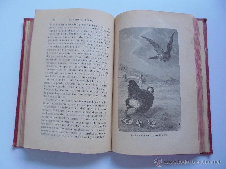 Libros antiguos: BIBLIOTECA DE MARAVILLAS. ERNESTO MENAULT. A. LE PILEUR. 1885-1886. 2 VOLUMENES. EL CUERPO HUMANO Y - Foto 45 - 52524378
