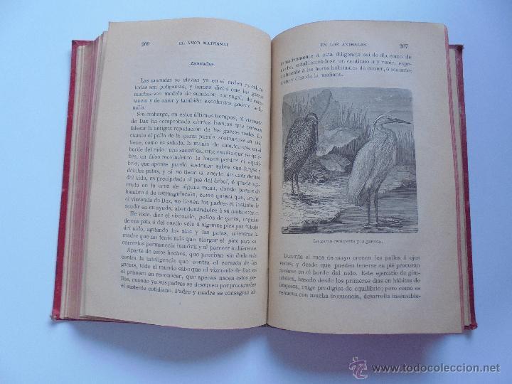 Libros antiguos: BIBLIOTECA DE MARAVILLAS. ERNESTO MENAULT. A. LE PILEUR. 1885-1886. 2 VOLUMENES. EL CUERPO HUMANO Y - Foto 46 - 52524378