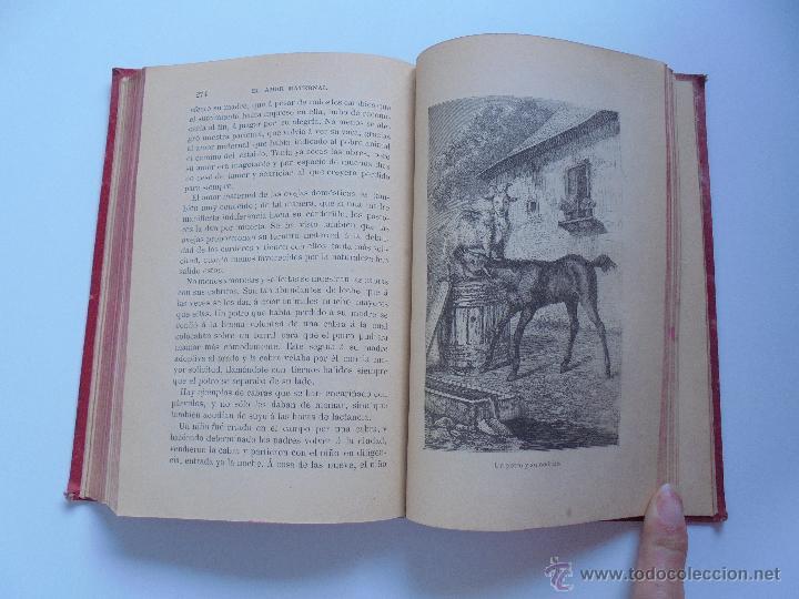 Libros antiguos: BIBLIOTECA DE MARAVILLAS. ERNESTO MENAULT. A. LE PILEUR. 1885-1886. 2 VOLUMENES. EL CUERPO HUMANO Y - Foto 48 - 52524378