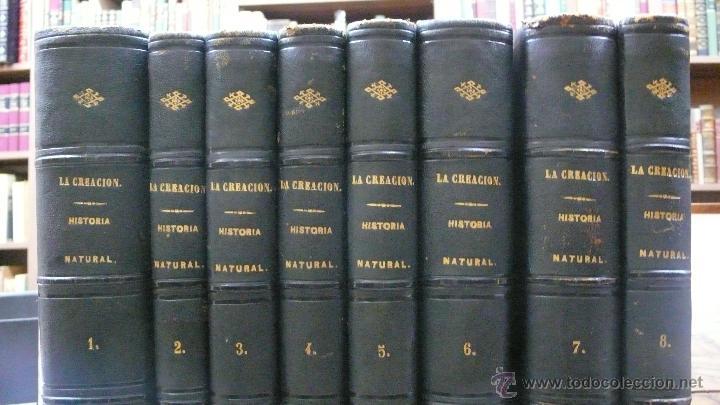 Libros antiguos: LA CREACION. HISTORIA NATURAL. JUAN VILANOVA Y PIERA. MONTANER Y SIMON. 8 VOL. 1872-76. - Foto 2 - 52884209