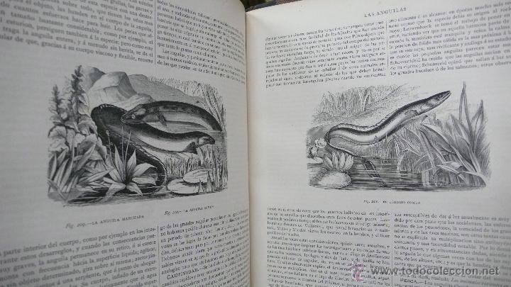 Libros antiguos: LA CREACION. HISTORIA NATURAL. JUAN VILANOVA Y PIERA. MONTANER Y SIMON. 8 VOL. 1872-76. - Foto 15 - 52884209