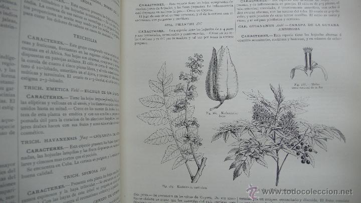 Libros antiguos: LA CREACION. HISTORIA NATURAL. JUAN VILANOVA Y PIERA. MONTANER Y SIMON. 8 VOL. 1872-76. - Foto 17 - 52884209