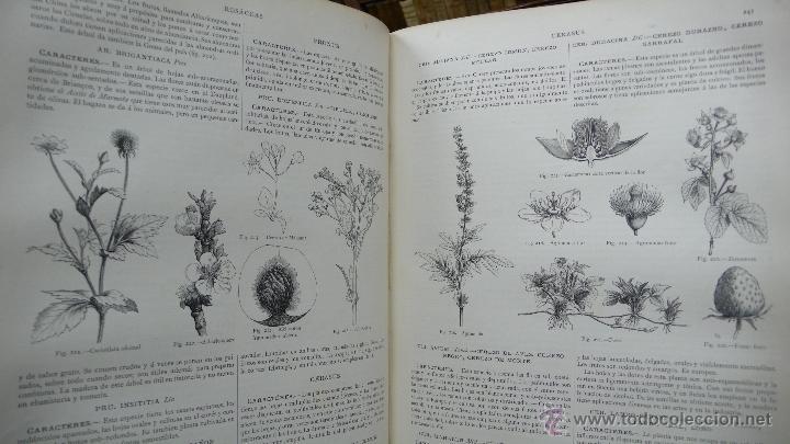 Libros antiguos: LA CREACION. HISTORIA NATURAL. JUAN VILANOVA Y PIERA. MONTANER Y SIMON. 8 VOL. 1872-76. - Foto 18 - 52884209