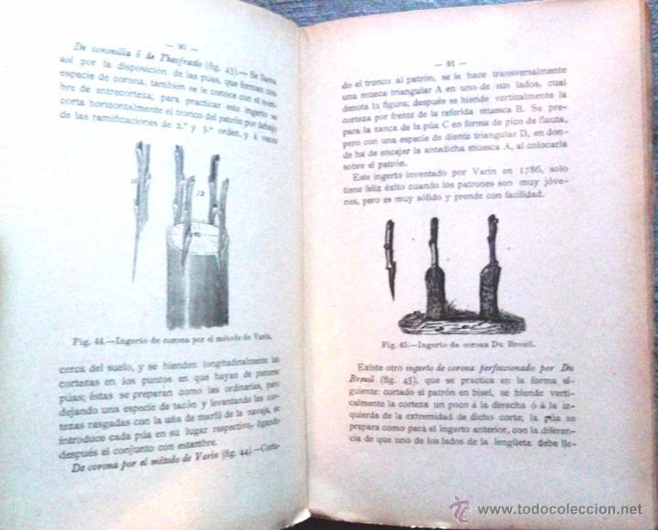 Libros antiguos: Tratado teórico-práctico del injerto y poda. García Moreno Librería de Luis Santos 1916 agricultura - Foto 4 - 53005960