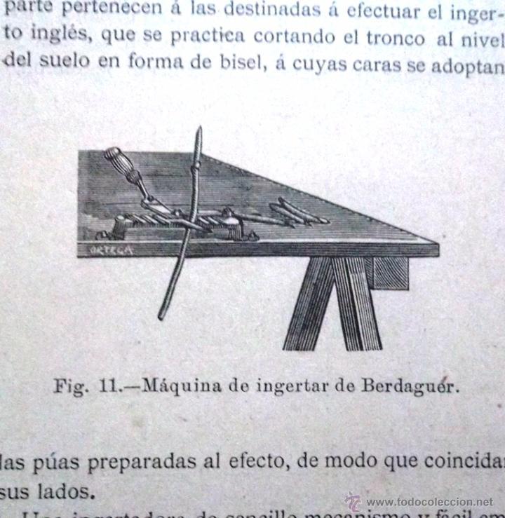 Libros antiguos: Tratado teórico-práctico del injerto y poda. García Moreno Librería de Luis Santos 1916 agricultura - Foto 5 - 53005960