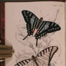 Libros antiguos: KIRBY, W.F: A HAND-BOOK TO THE ORDER LEPIDOPTERA. 5 VOLS. 1896-97. MARIPOSAS. Lote 53158204