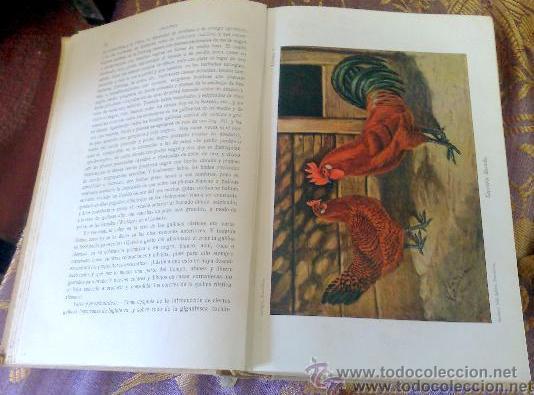 Libros antiguos: AÑO 1931.- GRAN LIBRO DE TRATADO DE AVICULTURA - Foto 3 - 28269709