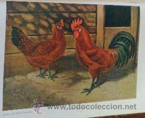 Libros antiguos: AÑO 1931.- GRAN LIBRO DE TRATADO DE AVICULTURA - Foto 4 - 28269709