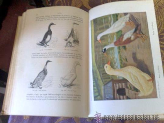 Libros antiguos: AÑO 1931.- GRAN LIBRO DE TRATADO DE AVICULTURA - Foto 7 - 28269709