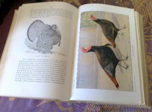 Libros antiguos: AÑO 1931.- GRAN LIBRO DE TRATADO DE AVICULTURA - Foto 9 - 28269709