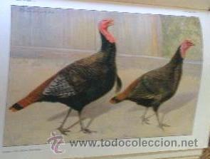 Libros antiguos: AÑO 1931.- GRAN LIBRO DE TRATADO DE AVICULTURA - Foto 10 - 28269709