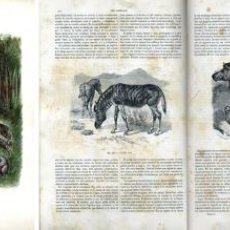 Libros antiguos: HISTORIA NATURAL MONTANER & SIMÓN 1885. Lote 53251484