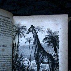Libros antiguos: 1847 - HISTORIA NATURAL DE LOS CUADRUPEDOS - BUFFON - CON GRABADOS. Lote 53306344