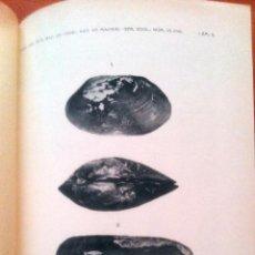 Libros antiguos: NÁYADES DEL VIAJE AL PACÍFICO F. HAAS 1916 JUNTA AMPLIACIÓN DE ESTUDIOS E INVESTIGACIONES CIENTÍFICA. Lote 54036990