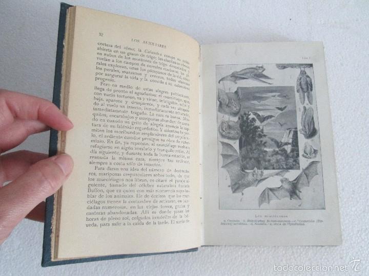 Libros antiguos: J.H. FABRE. LOS AUXILIARES. CONVERSACIONES SOBRE LOS ANIMALES UTILES A LA AGRICULTURA. 1920. - Foto 10 - 55684052