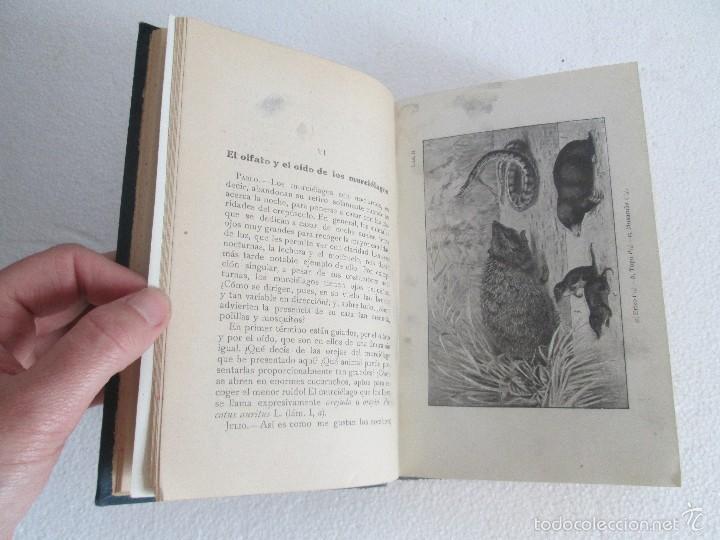 Libros antiguos: J.H. FABRE. LOS AUXILIARES. CONVERSACIONES SOBRE LOS ANIMALES UTILES A LA AGRICULTURA. 1920. - Foto 12 - 55684052