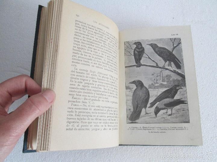 Libros antiguos: J.H. FABRE. LOS AUXILIARES. CONVERSACIONES SOBRE LOS ANIMALES UTILES A LA AGRICULTURA. 1920. - Foto 13 - 55684052